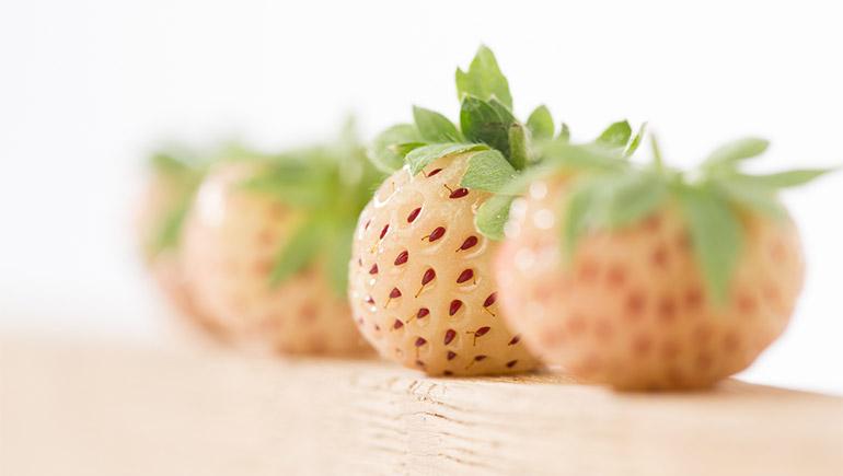 pineberry พายเบอร์รี่ พืช สตรอว์เบอร์รี่
