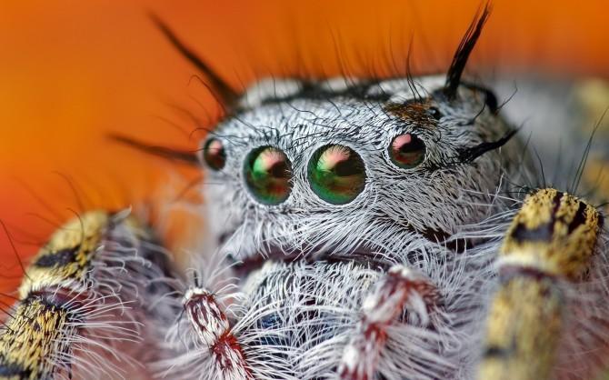 ตาแมงมุม