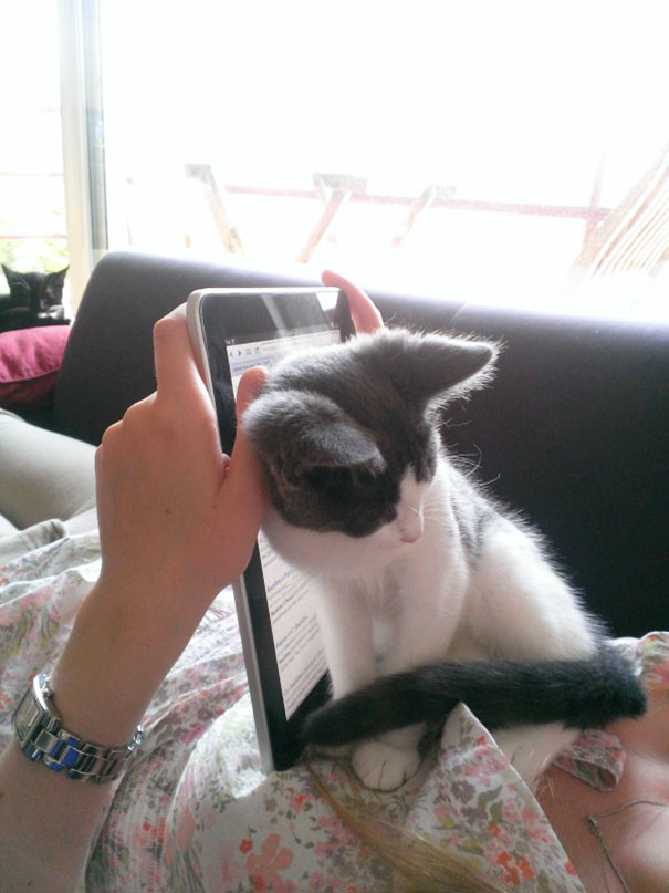 cats_who_wont_let_you_read_11