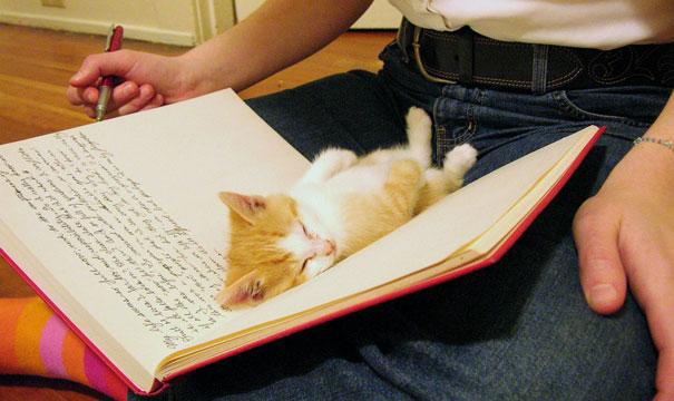 เป็นแมว นอนที่ไหนก็ได้