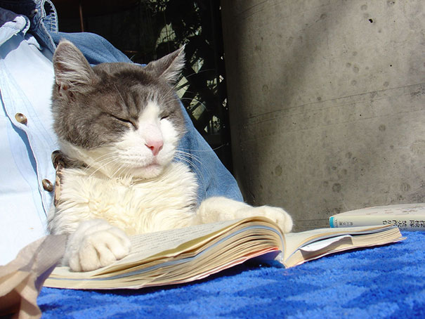 cats_who_wont_let_you_read_14