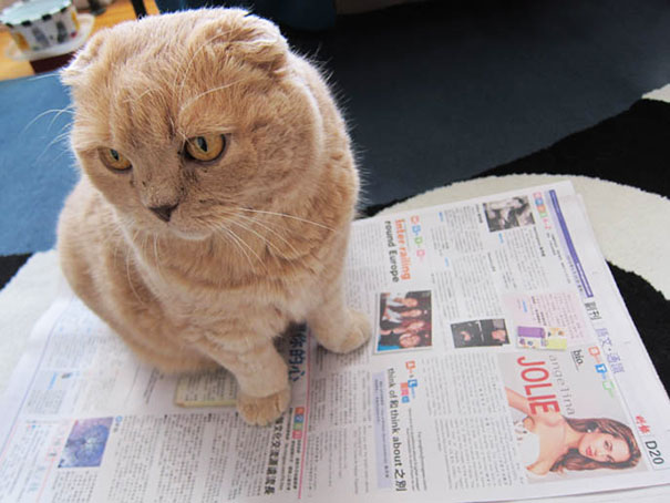 cats_who_wont_let_you_read_16