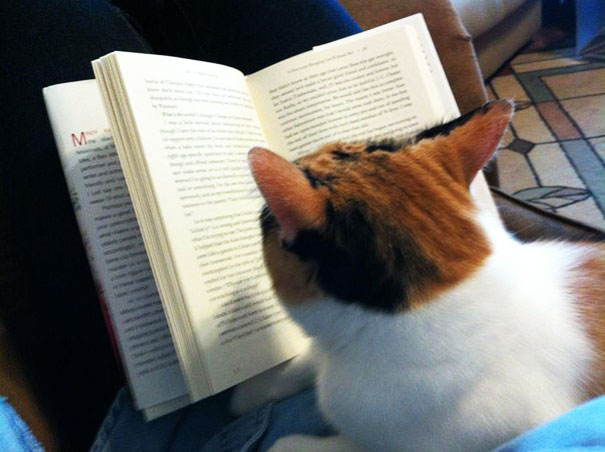 cats_who_wont_let_you_read_19