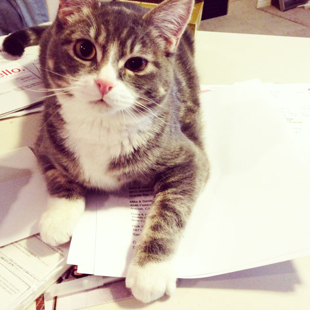 cats_who_wont_let_you_read_20