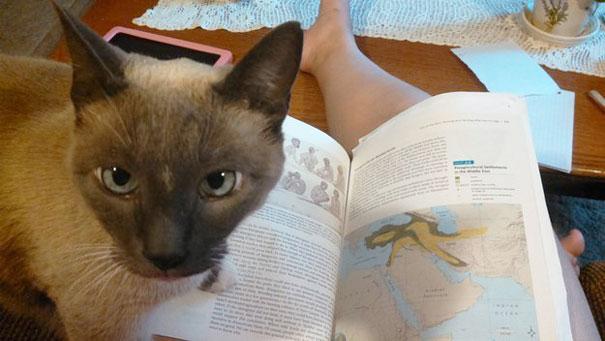 แน่ใจนะว่าจะอ่านหนังสือ ฮึ?