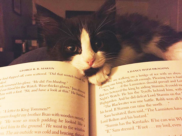 cats_who_wont_let_you_read_3