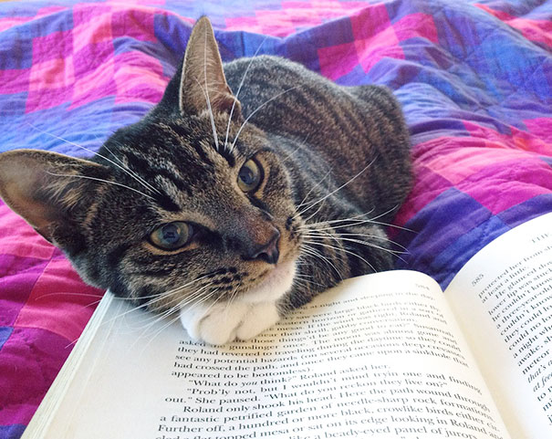 cats_who_wont_let_you_read_34