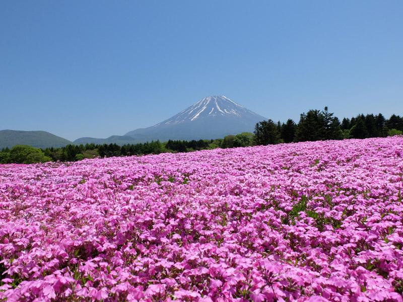 ญี่ปุ่น ดอกไม้ ท่องเที่ยว เที่ยวญี่ปุ่น เที่ยวต่างประเทศ