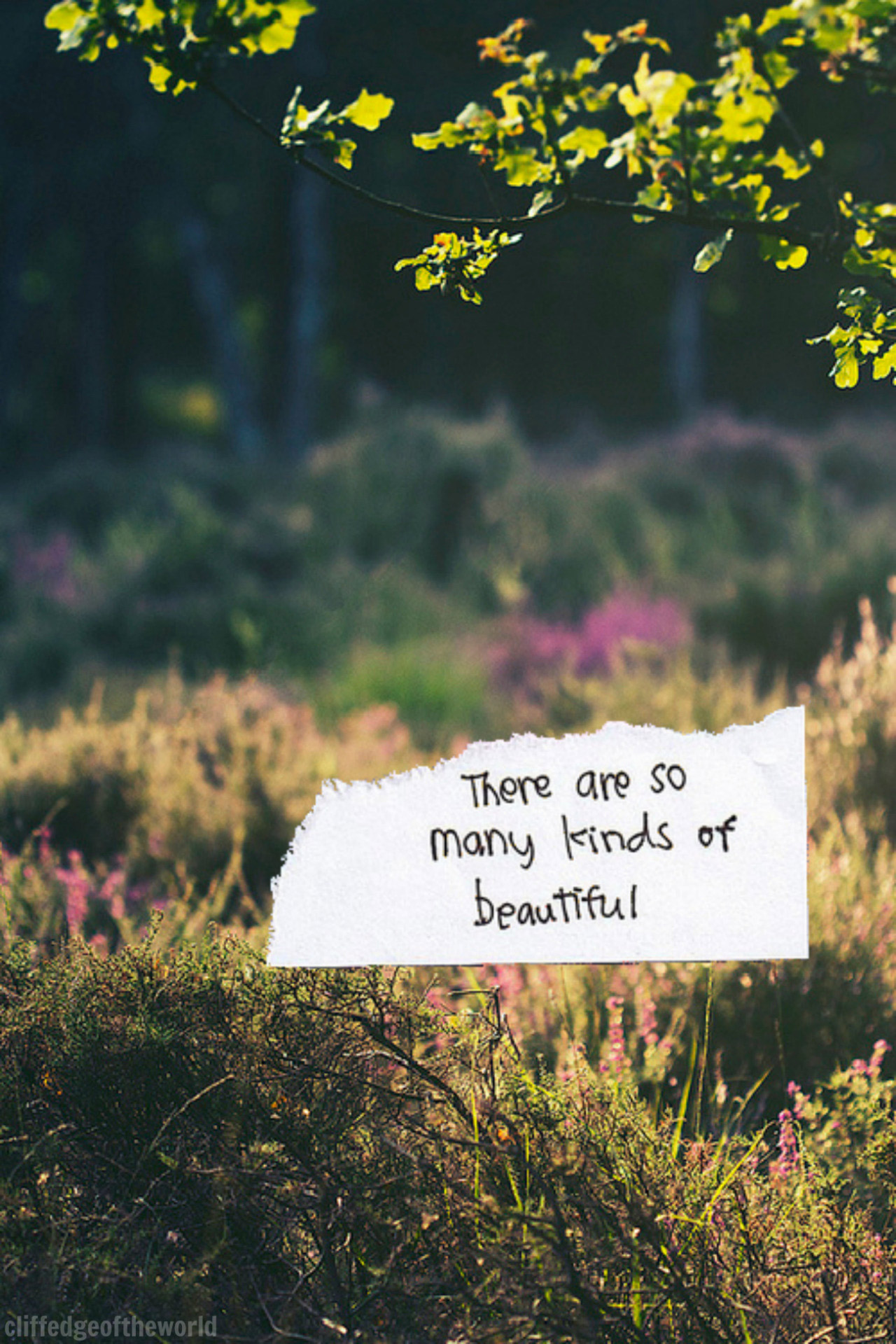 text-tumblr_moes6st63K1rwyxwco1_1280