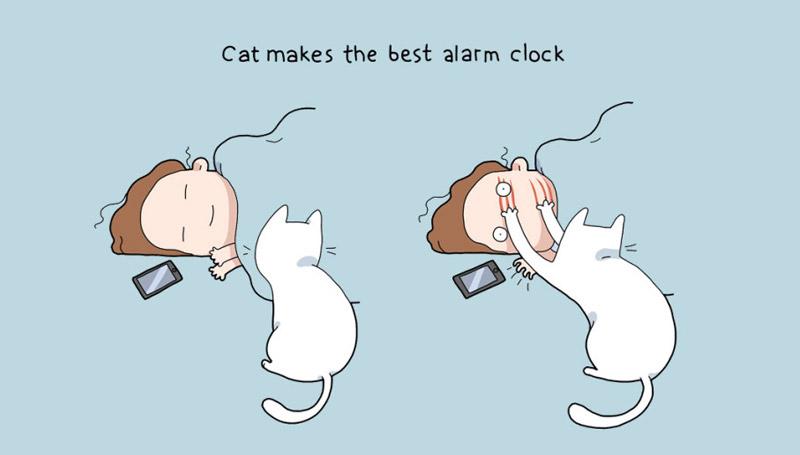 cat ข้อดี แมว