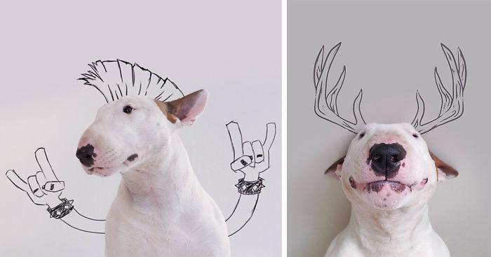 Bull Terrier น้องหมา บูลล์เทอร์เรีย ศิลปะ