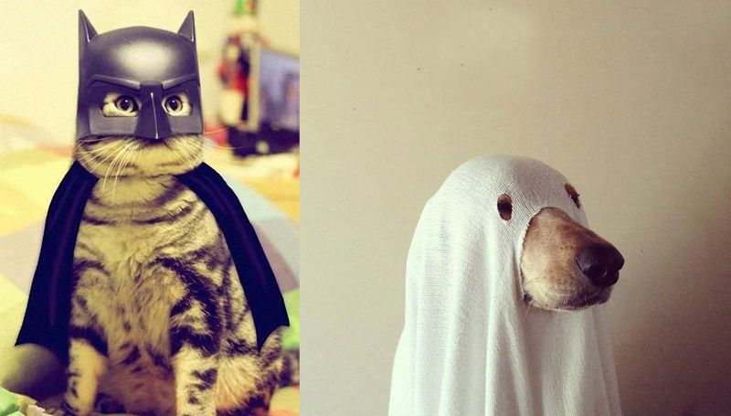 dog คอสเพลย์ สัตว์น่ารัก แมว