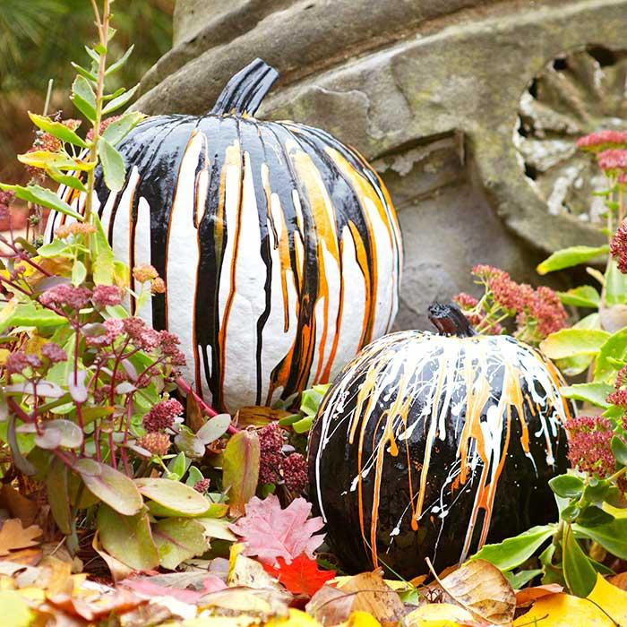 drip-pumpkins