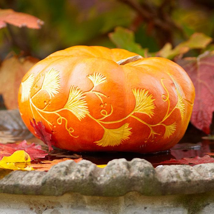 ginkgo-pumpkin