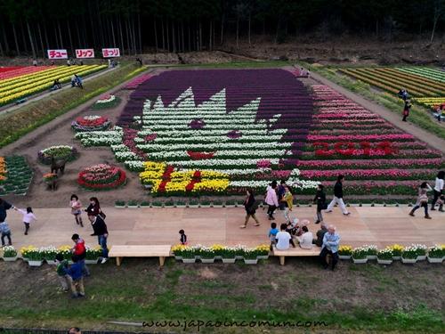 น่ารัก! ทุ่งดอกทิวลิปตัวการ์ตูน ที่เมืองทันโจ ประเทศญี่ปุ่น