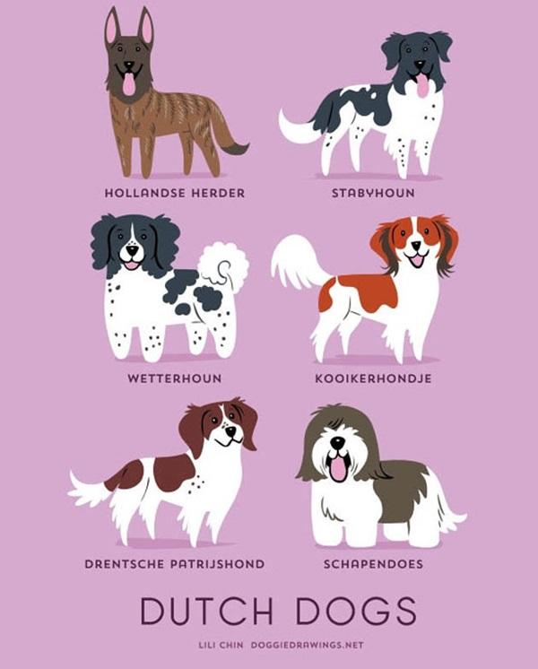 วิธีการดูความแตกต่างของสุนัขพันธุ์ต่างๆ-11