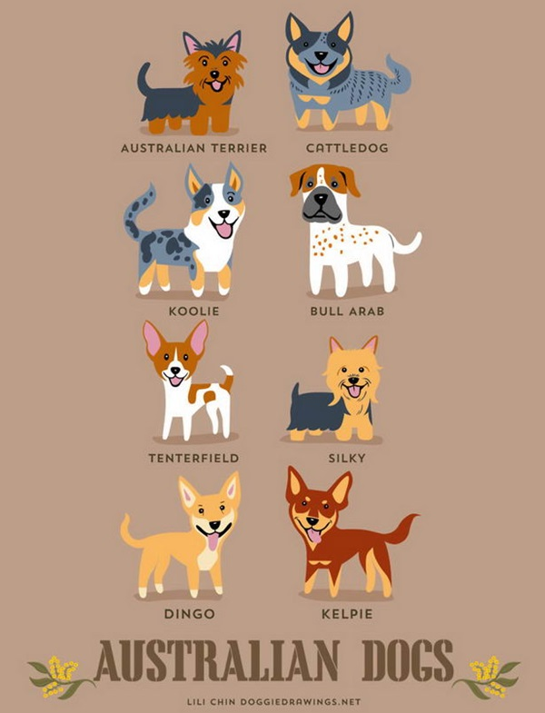 วิธีการดูความแตกต่างของสุนัขพันธุ์ต่างๆ-4