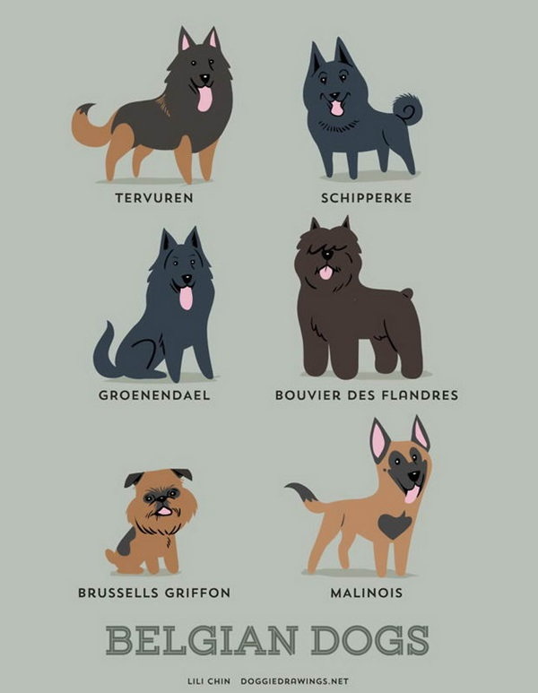Belgian Dogs