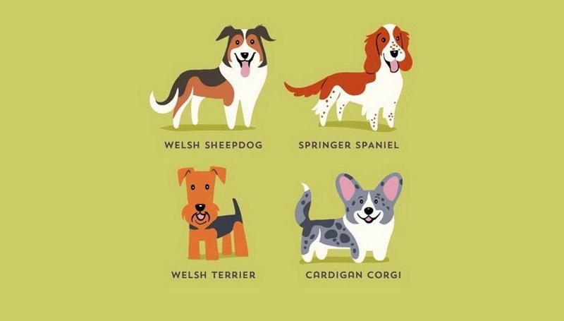 dog ทั่วโลก สัตว์โลกน่ารัก สายพันธุ์สุนัข สุนัข