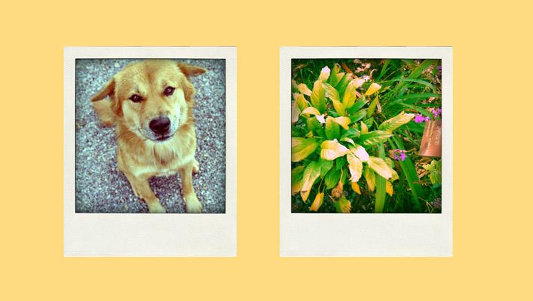 Polaroid สร้างรูปโปรไฟล์ โปรแกรมแต่งรูป โพลารอยด์