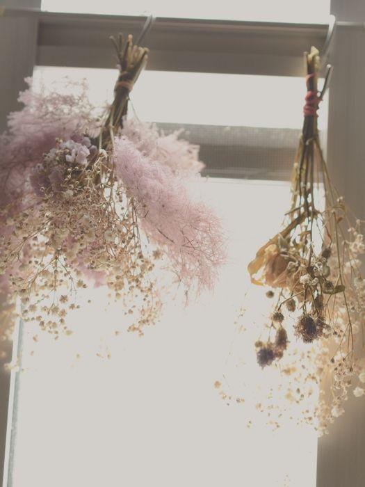ดอกไม้แห้งน่ารักๆ (2)