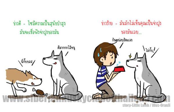 นิสัยเจ้าหมา พันธุ์ไซบีเรียน (1)