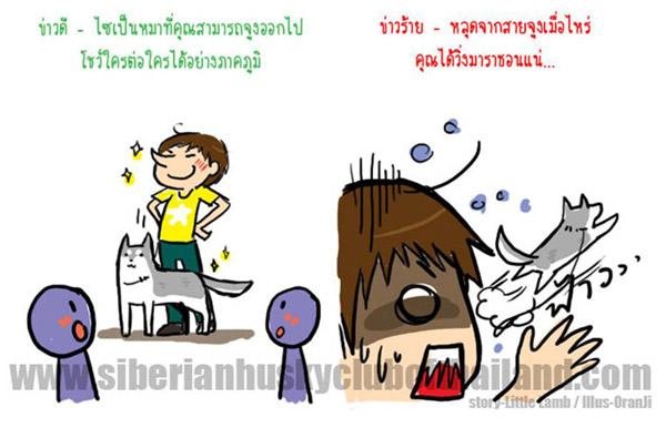 นิสัยเจ้าหมา พันธุ์ไซบีเรียน (6)
