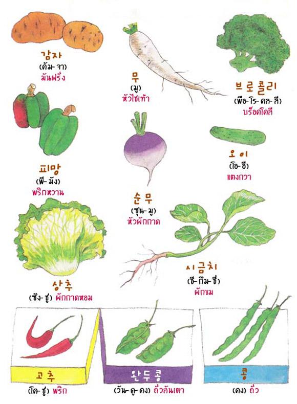 เรียนศัพท์เกาหลี ด้วยรูปภาพชุด ผัก