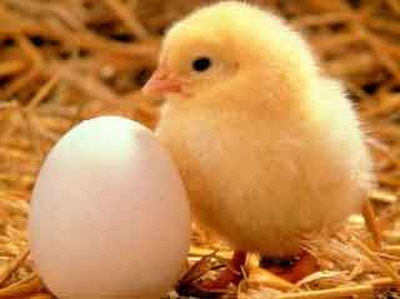 ไก่กับไข่ อะไรเกิดก่อนกัน