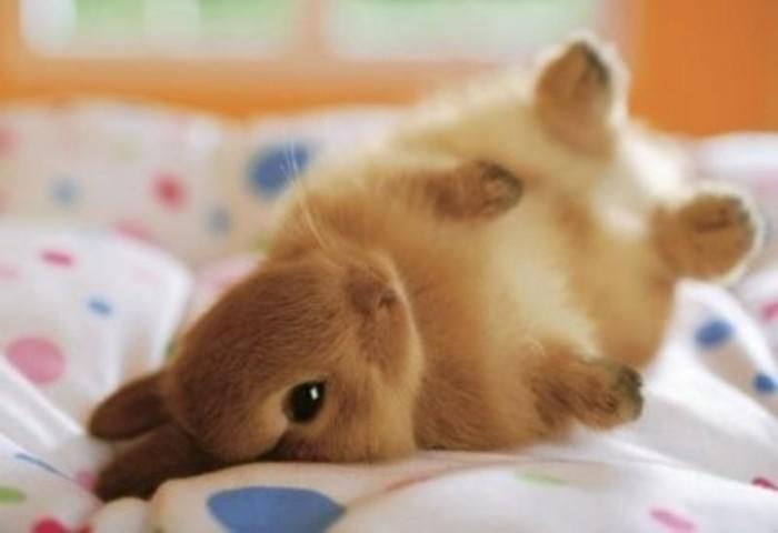 เริ่มต้นง่าย ๆ กับเจ้ากระต่ายปุกปุย