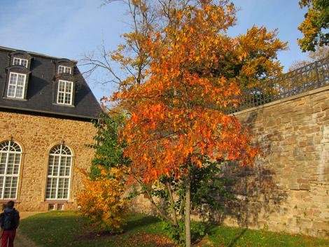 Quedlinburg9