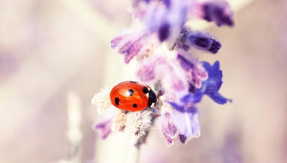 30 เรื่องน่ารู้ เกี่ยวกับแมลง - บางเรื่องน่าทึ่งมาก