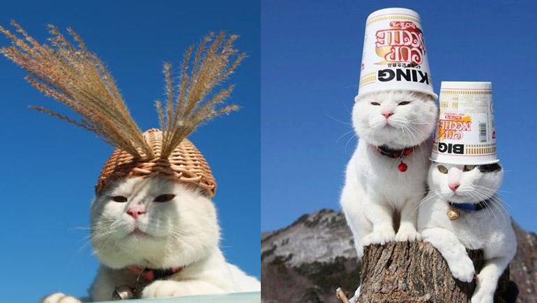 Basket Cat Kagoneko Shironeko ทาสแมว แมวตะกร้า แมวน่ารัก