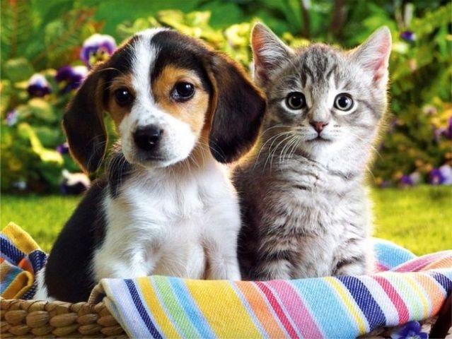 ทำไม? สุนัขและแมว ที่หลงหาทางกลับบ้านเองได้
