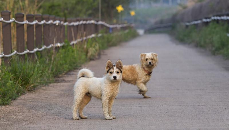 dog pet สัตว์เลี้ยง สุนัข หมา