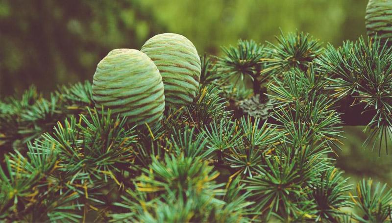ต้นไม้ ทำนาย วันเกิด เรียนภาษาอังกฤษ