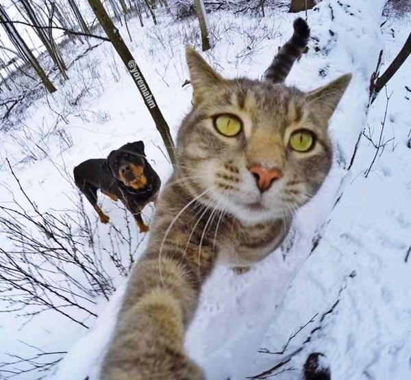 เห็นแล้วฮา! เมื่อแมวเซลฟี่ กับแกงค์น้องหมา น่ารักมาก ทาสแมวต้องดู (3)