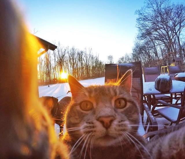 แมวเซลฟี่กับหมา ทาสแมวต้องดู