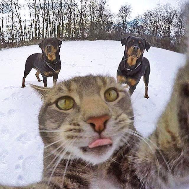 เห็นแล้วฮา! เมื่อแมวเซลฟี่ กับแกงค์น้องหมา น่ารักมาก ทาสแมวต้องดู (6)