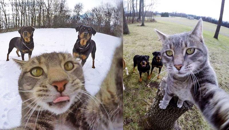 ขำขำ ตลก ทาสแมว แมว แมวน่ารัก แมวเซลฟี่