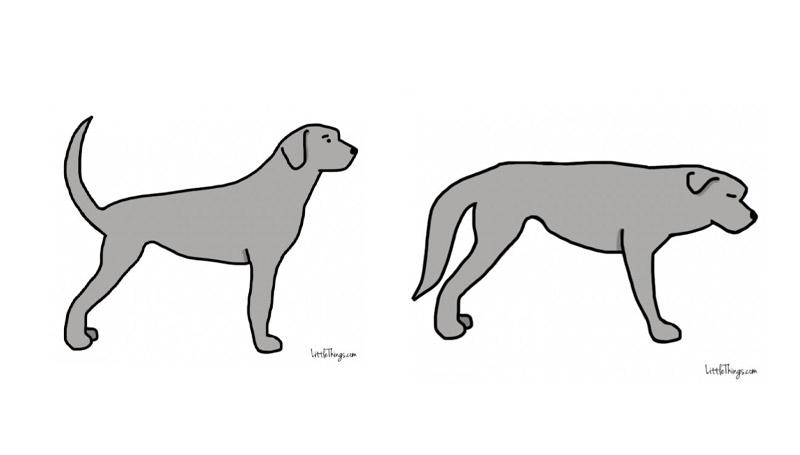 ภาษากาย สัตว์เลี้ยง สุนัข หมา หางสุนัข