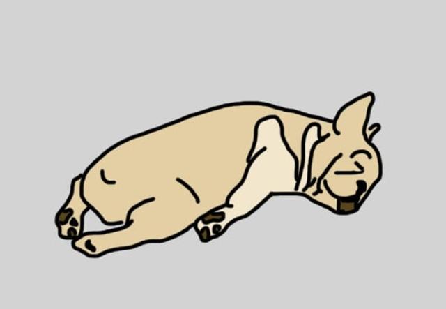 dog ท่านอน ลักษณะนิสัย สุนัข หมา
