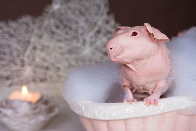 nude-guinea-pig-bath-time-erin-bonilla-14
