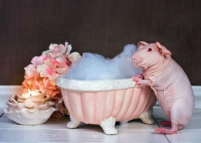 nude-guinea-pig-bath-time-erin-bonilla-5