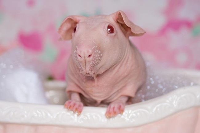nude-guinea-pig-bath-time-erin-bonilla-6