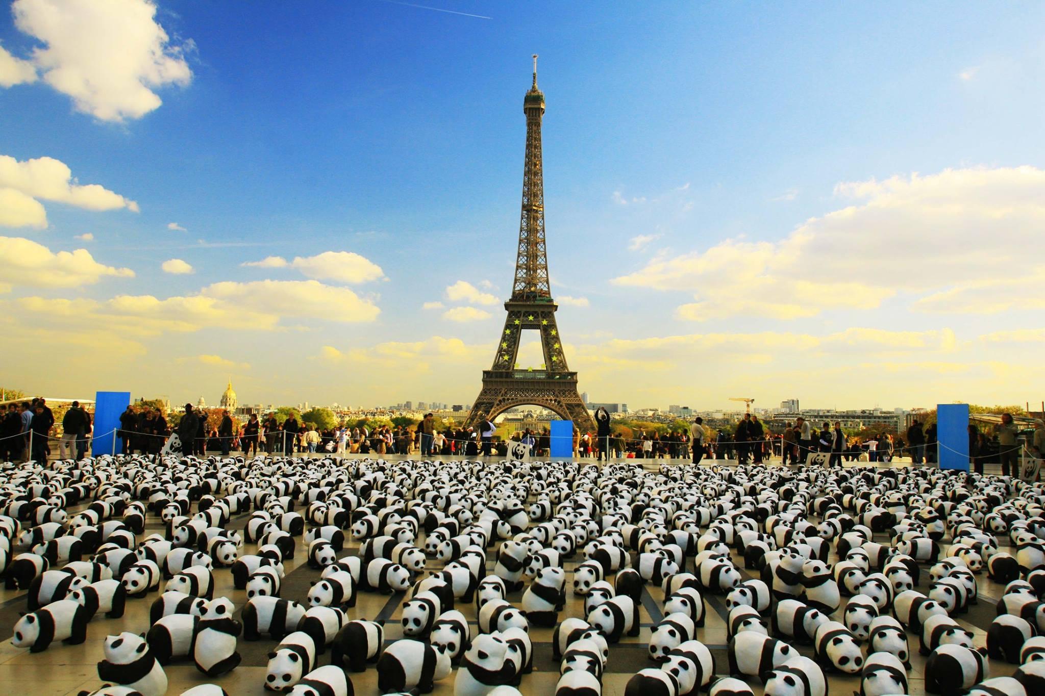 ภาพแพนด้าที่ฝรั่งเศส