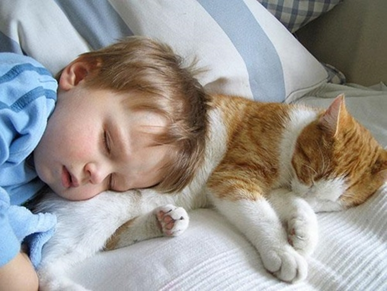 ภาพความน่ารัก เด็ก แมว