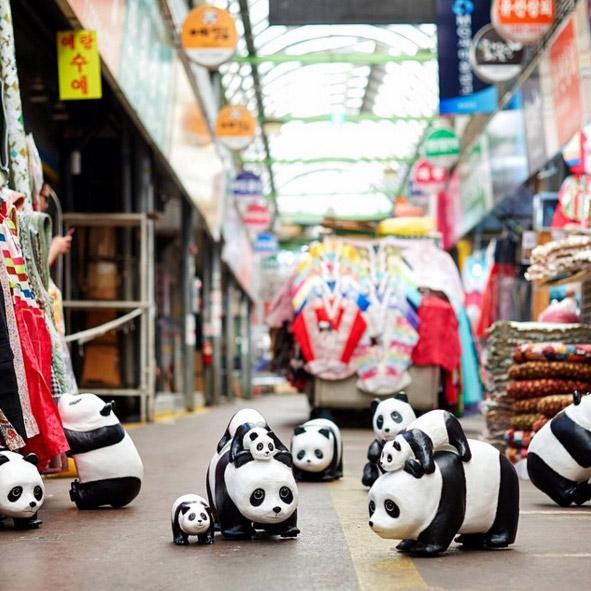pandas-korea