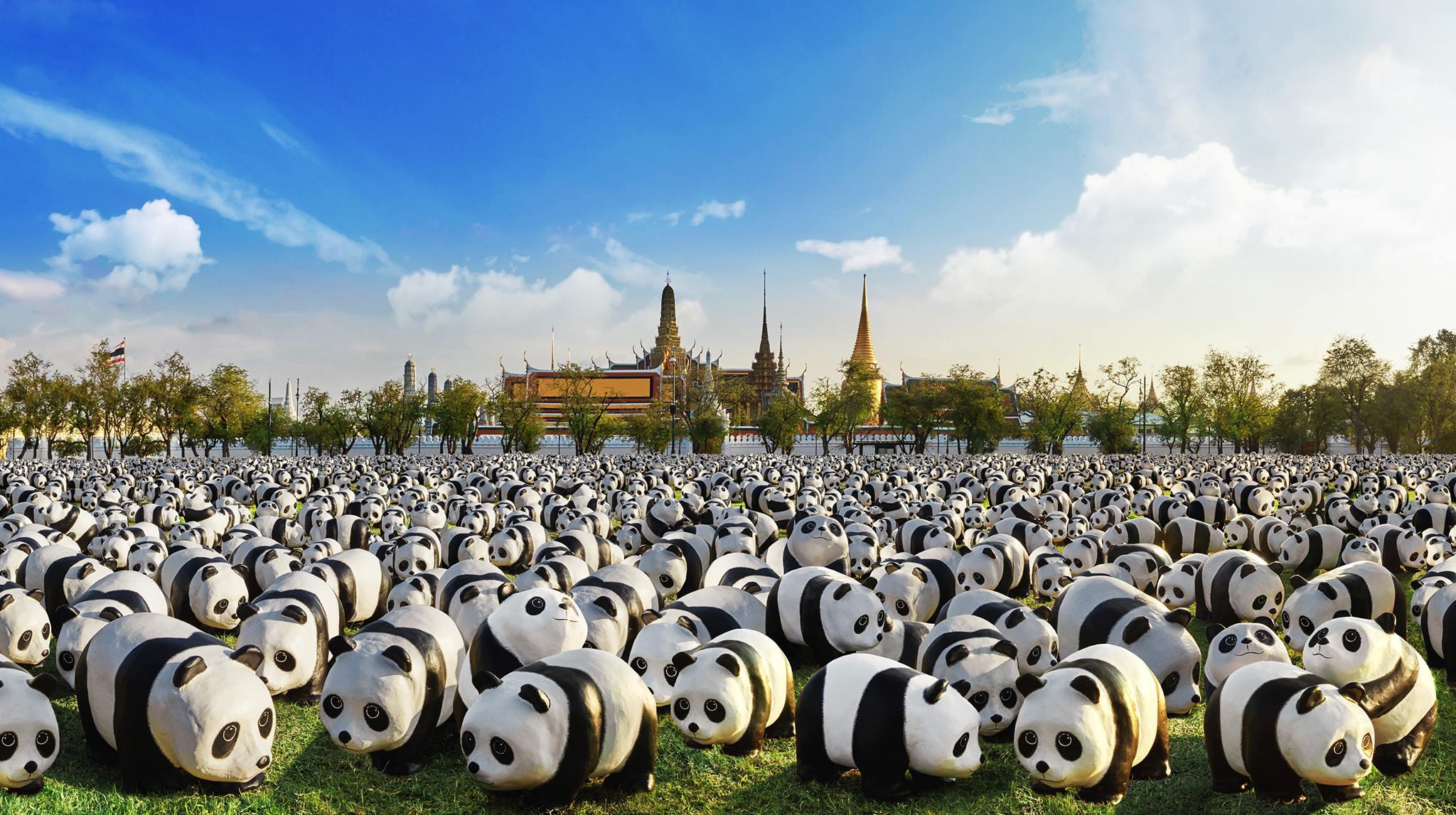 pandas1600-thailand