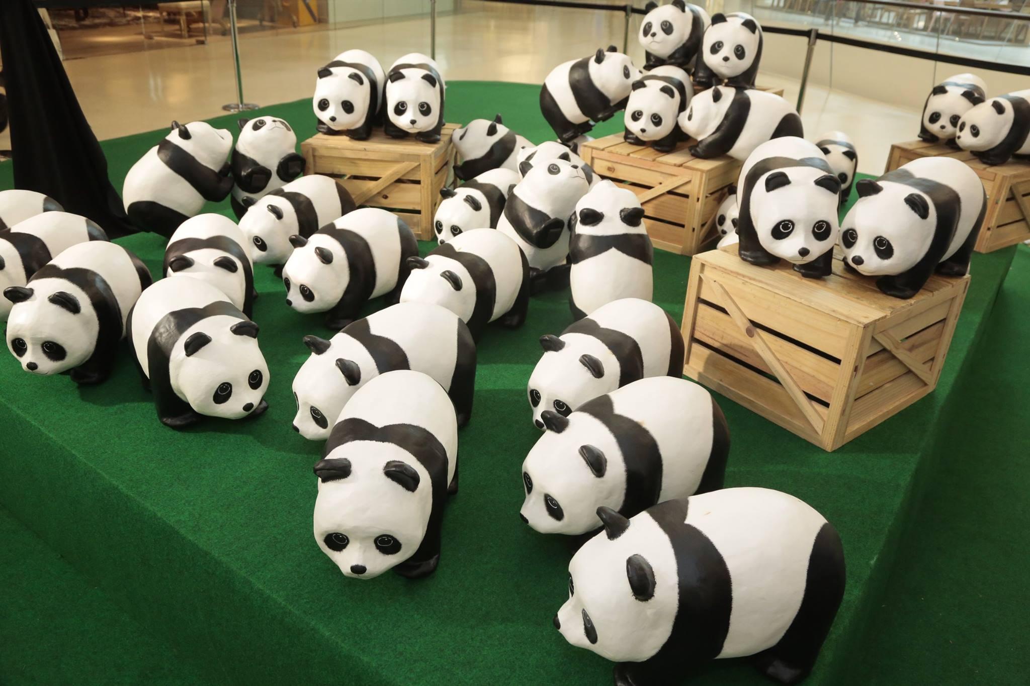 Panda ท่องเที่ยว เซ็นทรัลเอ็มบาสซี เปเปอร์มาร์เช่ แพนด้า แฟลชม็อบ
